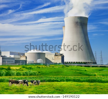 Cows grazing close to a nuclear power station - stock photo