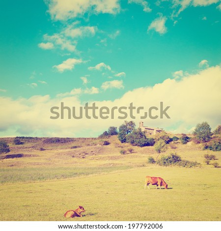 Cows  Grazing on Alpine Meadows in France near the Medieval Church, Retro Effect - stock photo
