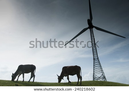 Cows grazing on lush grass near the windmills - stock photo