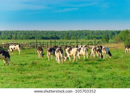 Cows Grazing View - stock photo