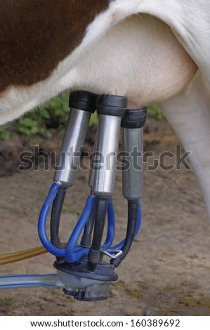Cows in a farm. Automatic milking machine, datail. - stock photo