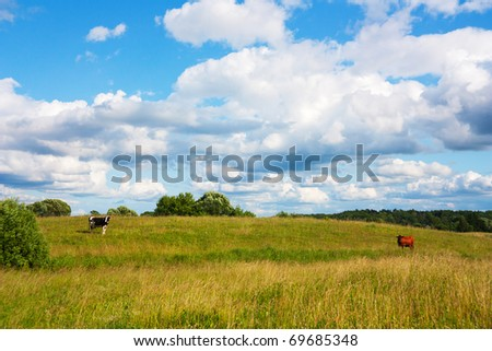 cows in the meadow, summer landscape - stock photo