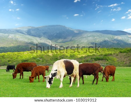 Cows on farm. Agricultural composition - stock photo