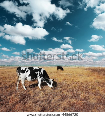 Cows on meadow with grass under blue sky with clouds - stock photo