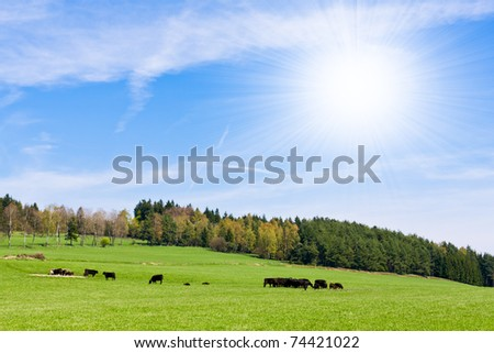 cows on pasture in beautiful landscape - stock photo
