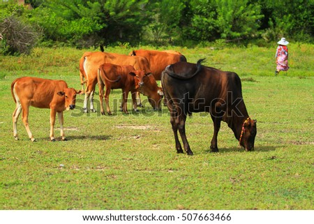 Cows on the green grass