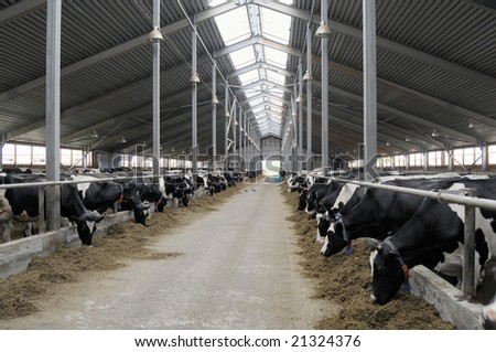 Cowshed. - stock photo