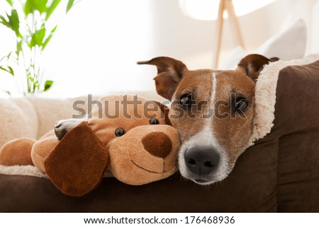 cozy couple of dog and best friend resting on sofa - stock photo
