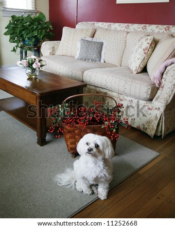 cozy living room with dog in foreground - stock photo