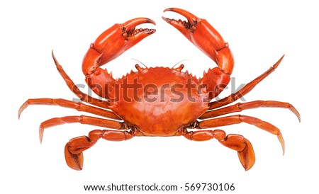 how to clean fresh mud crab