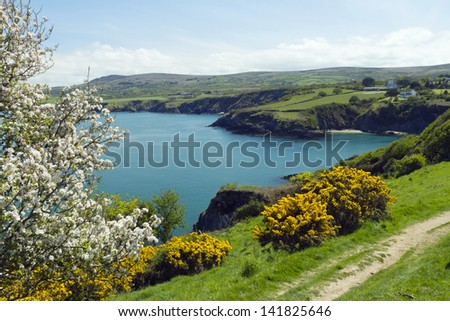 Crab apple tree and gorse bushes in bloom on the Pembrokeshire Coast of Wales, UK - stock photo