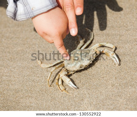 Crab caught kids on the beach on spring day - stock photo