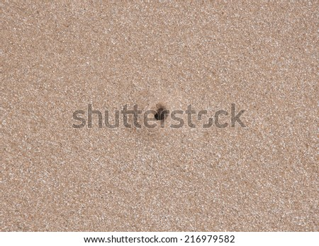 crab hole on the beach - stock photo