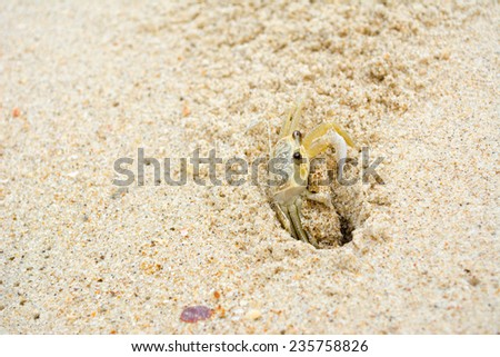 crab in lair - stock photo