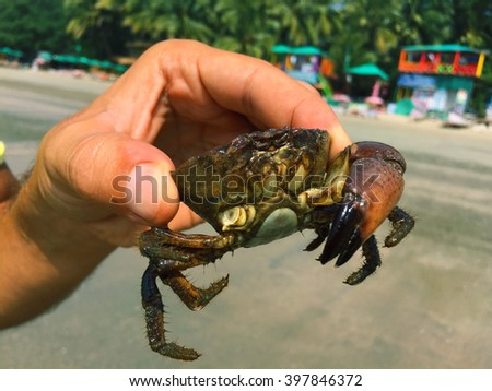 Crab in men's hand on the beach, catching the crab, green crab in man's hand, sea animal catched, beach scene, tropical animal on summer beach, summer vacation by the sea, man's hand holding crab - stock photo