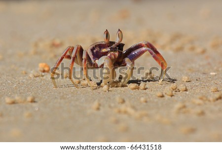 crab on the beach - stock photo
