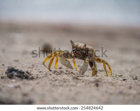 Crab on the beach in Thailand - stock photo