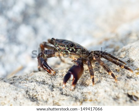 crab on the rock, close-up - stock photo