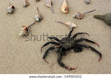 crab, sea shells on sand beach. thailand.