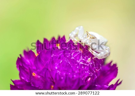 crab spider on violet flower - stock photo