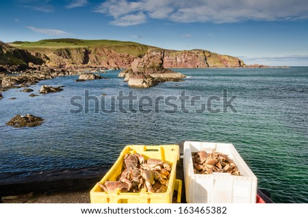 Crabs at St Abbs / A rugged and rocky approach to St Abbs harbour - stock photo