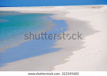 Crabs on the white sand beach of the island of Socotra. Yemen - stock photo