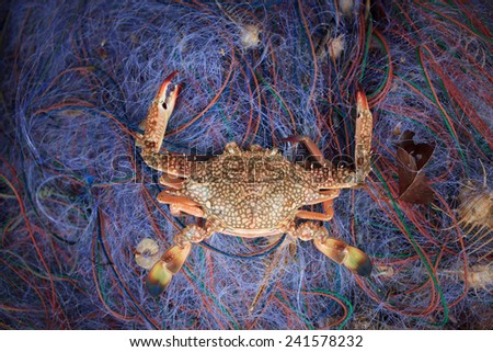 crabs t in the fishing net  - stock photo