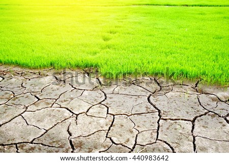 cracked dry soil texture and green rice field background, global warming concept