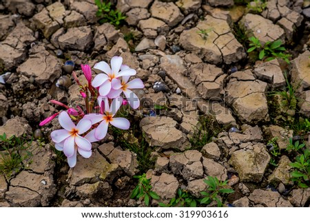 cracked earth, ground texture with blooming flower - stock photo