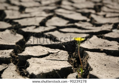 Cracked land - stock photo