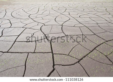 Cracked land texture with grass - stock photo