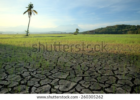 cracked soil in a dried paddy field. there are palm tree with background mount of kinabalu borneo,sabah,malaysia. (Shallow DOF, slight motion blur)  - stock photo