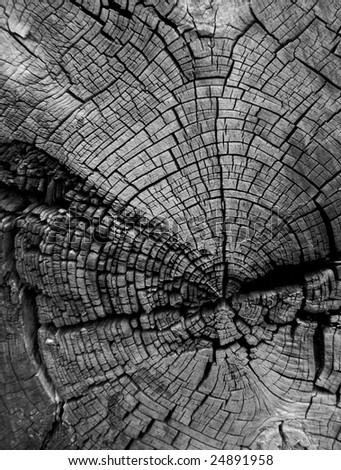 Cracked tree stump showing age rings in black and white - stock photo