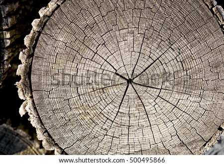 Cracked wood texture of a tree with rings and high contrast dark brown tones