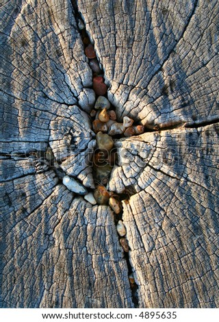 Cracked wood with stones - stock photo
