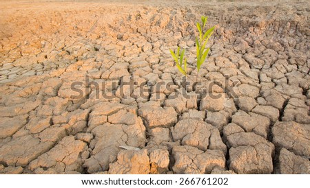 Cracks in the land in rural areas, Thailand - stock photo
