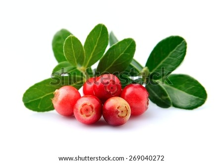 Cranberries with leaves close up on white background.  - stock photo
