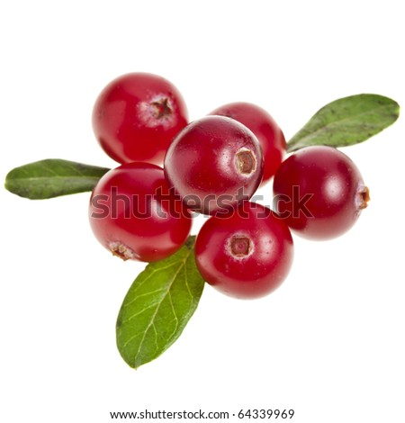 cranberry decor close up isolated on white background