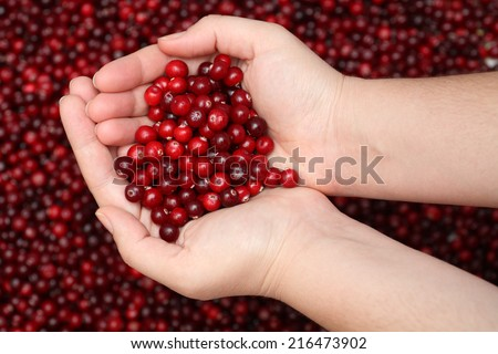 Cranberry in palms. - stock photo