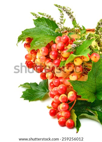 cranberry twig with green leaves and mint in the basket isolated on white - stock photo