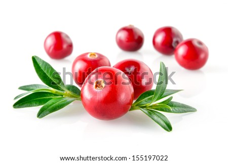 Cranberry with leaves in closeup - stock photo