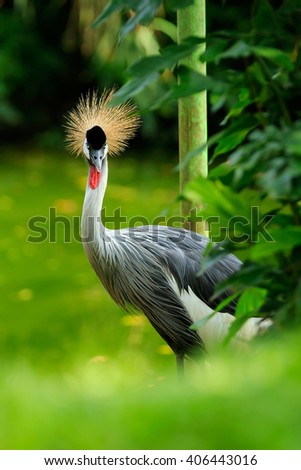 crane with crown - stock photo