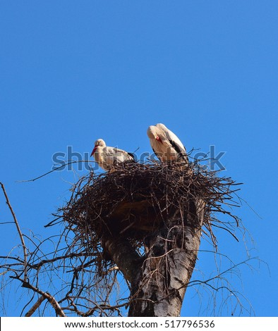 Cranes in cranes nest and bright blue sky. Two storks in bird nest. Two cranes birds standing in bird nest agains blue sky