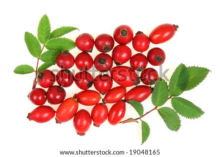 Crataegus monogyna, known as Common Hawthorn, is a species of hawthorn native to Europe, northwest Africa and western Asia. Other common names include may, mayblossom, maythorn, quickthorn, whitethorn