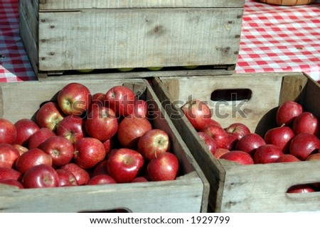 Crates of fresh picked red apples. - stock photo
