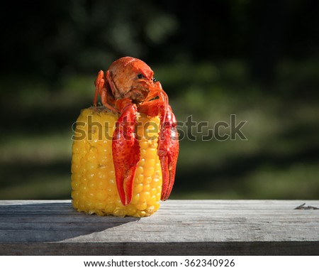 Crawfish Atop Corn Cob, 2 - stock photo