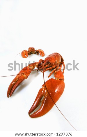 crayfish against whites