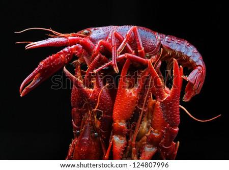 Crayfish on a black background - stock photo