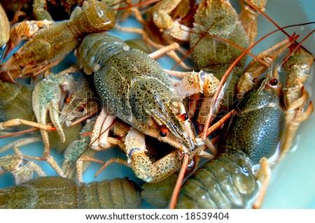 crayfishs - stock photo