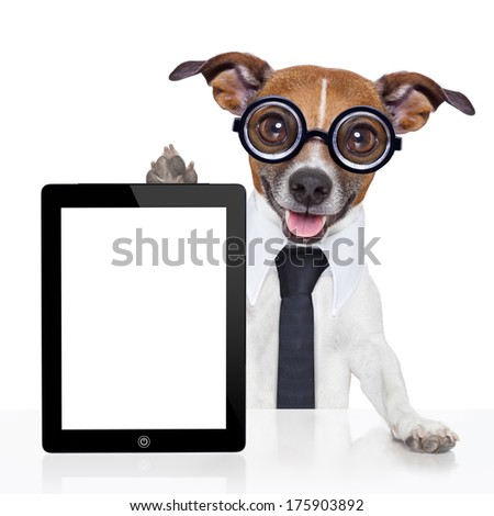 crazy business dog with a tie  and glasses